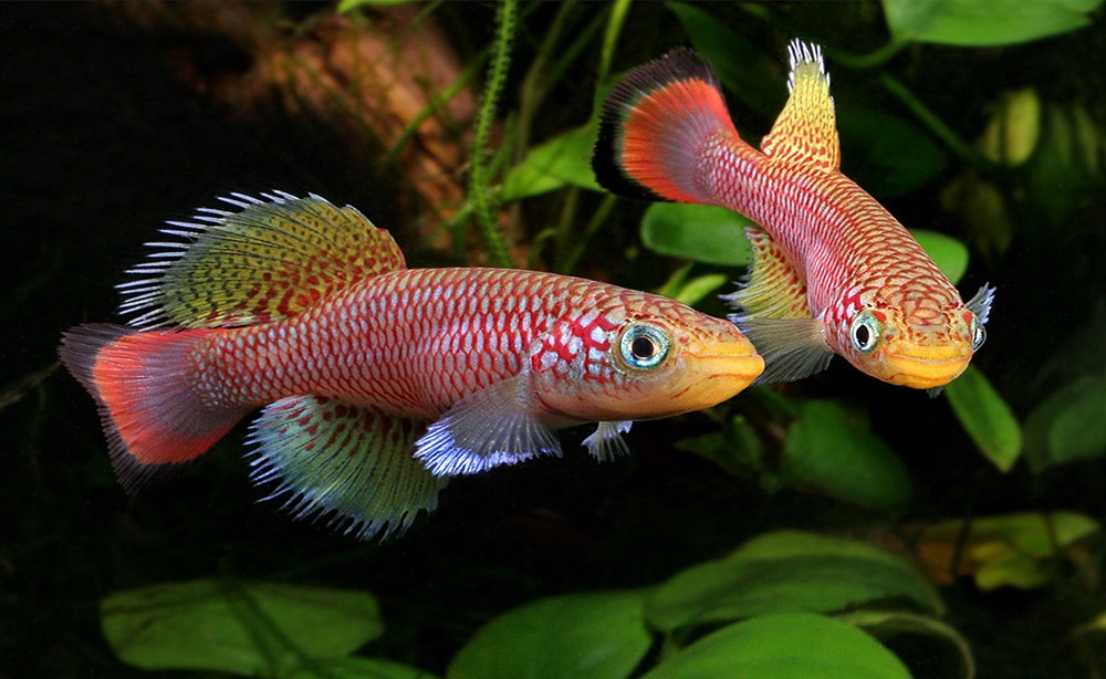 11 types of freshwater fish for tropical aquarium most popular
