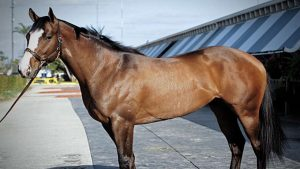 most expensive horses in the world