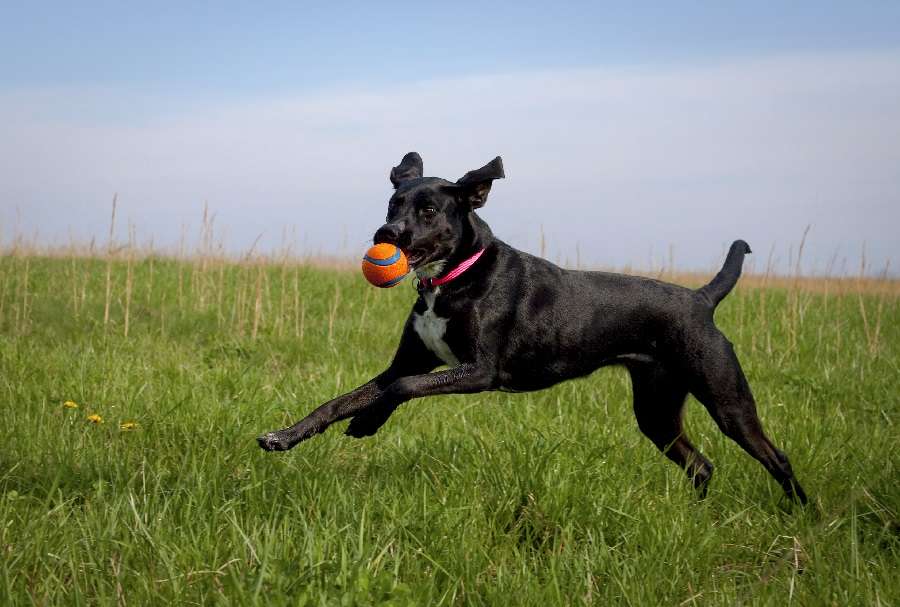 Best games for puppies